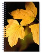 Oak Leaf Trio Spiral Notebook