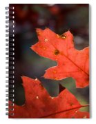 Oak Leaves Aglow Spiral Notebook