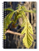 Oak Leaves In May Dawn Light Spiral Notebook