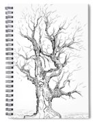 Oak Tree Abstract Study Spiral Notebook