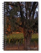 Oak Tree And Vineyards In Knight's Valley Spiral Notebook