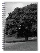 Oak Tree - Killarney National Park Spiral Notebook