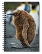 Oakum Boy King Penguin Asleep On Beach Spiral Notebook