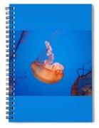 Ocean Beauty Spiral Notebook
