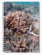Ocean Fiji Spiral Notebook