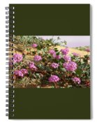 Ocotilla Wells Pink Flowers 2 Spiral Notebook