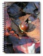 October Acorn Spiral Notebook
