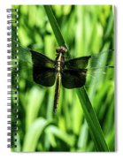 Odanate With Wings Spread Spiral Notebook