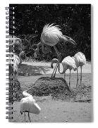Odd Bird Out In Black And White Spiral Notebook