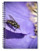 Odd Fly On Clematis Spiral Notebook