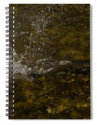 Of Fishes And Rainbows - Wild Salmon Run In The Creek Spiral Notebook
