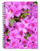 Office Art Azaleas Flower Art Prints 1 Azalea Flowers Giclee Baslee Troutman Spiral Notebook