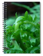Office Art Fern Fround Forest Ferns Art Prints Baslee Troutman Spiral Notebook