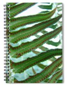 Office Art Ferns Green Forest Fern Giclee Prints Baslee Troutman Spiral Notebook