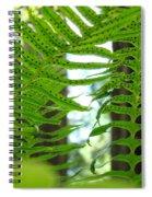 Office Art Ferns Redwood Forest Fern Giclee Prints Baslee Troutman Spiral Notebook