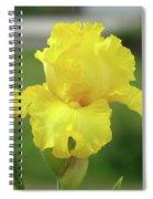 Office Art Irises Yellow Iris Flower Giclee Prints Baslee Troutman Spiral Notebook
