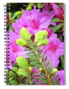 Office Art Pine Conifer Pink Azalea Flowers 38 Azaleas Giclee Art Prints Baslee Troutman Spiral Notebook