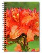 Office Art Prints Azaleas Botanical Landscape 11 Giclee Prints Baslee Troutman Spiral Notebook