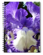 Office Art Prints Irises Purple White Iris Flowers 39 Giclee Prints Baslee Troutman Spiral Notebook