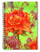 Office Art Prints Orange Azalea Flowers Landscape 13 Giclee Prints Baslee Troutman Spiral Notebook
