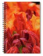 Office Art Prints Orange Azaleas Flowers 9 Giclee Prints Baslee Troutman Spiral Notebook