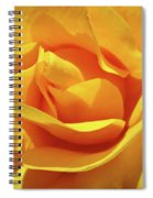 Office Art Prints Roses Orange Yellow Rose Flower 1 Giclee Prints Baslee Troutman Spiral Notebook