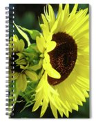 Office Art Sun Flowers Sunlit Sunflower Giclee Baslee Troutman Spiral Notebook