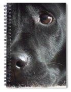 Oh Beau Beau Spiral Notebook