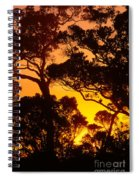 Ohia Trees At Sunset Spiral Notebook
