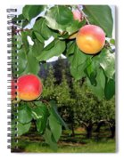 Okanagan Apricots Spiral Notebook