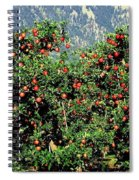 Okanagan Valley Apples Spiral Notebook