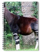 Okapi Spiral Notebook