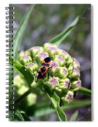 Oklahoma Beetle On Flower Spiral Notebook
