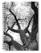 Old Cottonwood Tree Spiral Notebook
