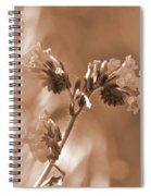 Old Fashioned Wild Flowers  Spiral Notebook