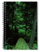 Old Growth Forest At Lost Lake On Mount Hood Spiral Notebook