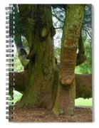 Old Huge Tree Spiral Notebook