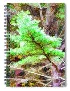 Old Pine Tree 1 Spiral Notebook