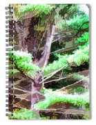 Old Pine Tree Spiral Notebook