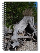 Old Stump Spiral Notebook