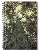 Old Sugar Maple Tree Spiral Notebook