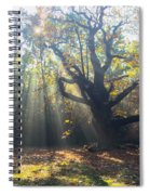 Old Tree And Sunbeams Spiral Notebook