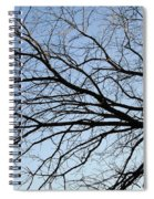 Old Tree Spiral Notebook
