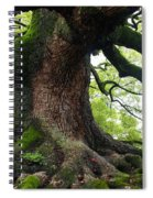 Old Tree In Kyoto Spiral Notebook