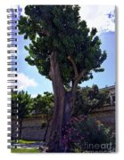 Old Tree In Palermo Spiral Notebook