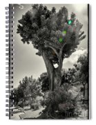Old Tree In Sicily Spiral Notebook