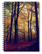 Old Tree Silhouette In Fall Woods Spiral Notebook