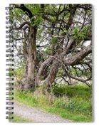 Old Weathered Tree Spiral Notebook