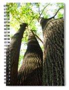 Oldgrowth Tulip Tree Spiral Notebook