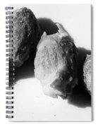 Olive Pips Spiral Notebook